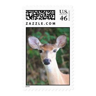 Baldy Deer Stamps