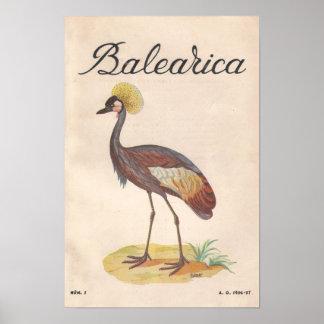 Balearica Vintage French Art Print 1956