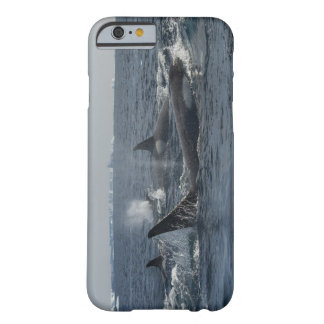 baleia de assassino barely there iPhone 6 case