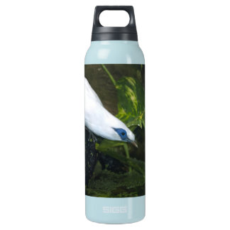 Bali Myna 16 Oz Insulated SIGG Thermos Water Bottle