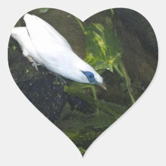 Bali Myna Heart Sticker