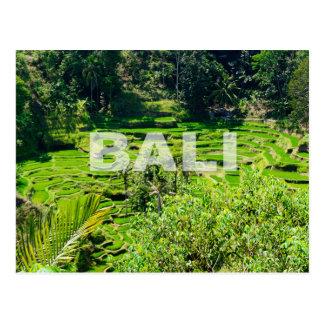 Bali Rice Terraces Postcard