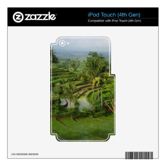 Bali - Young terrace ricefields and palms Skin For iPod Touch 4G