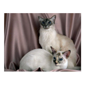 Balinese, blue tabby point and seal tortie point postcard