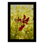 Balinese Red Flower Poster