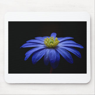 Balkan Anemone Flower Blue Mouse Pad