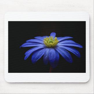 Balkan Anemone Flower Blue Mousepads