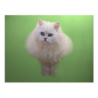 Ball of fluff kitten postcard