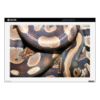 Ball Python 2 Decals For Laptops