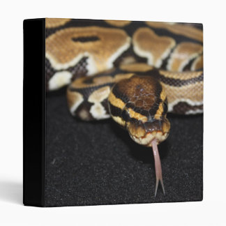 Ball Python Binder