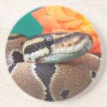 Ball Python, green background, orange rose Beverage Coasters