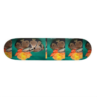 Ball Python, green background, orange rose Skateboard