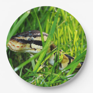 ball python in grass.png paper plate