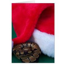 Ball Python next to Santa Hat, snake Christmas Cards
