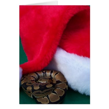 Ball Python next to Santa Hat, snake Christmas Cards