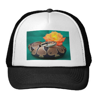 Ball python picture with orange rose green back hat