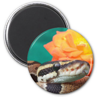 Ball python picture with orange rose green back 2 inch round magnet