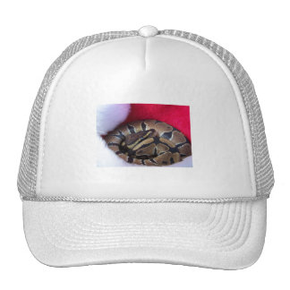 Ball Python Snake in Santa hat picture