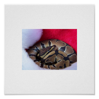 Ball Python Snake in Santa hat picture Poster
