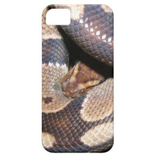 Ball Pythons 2 iPhone SE/5/5s Case
