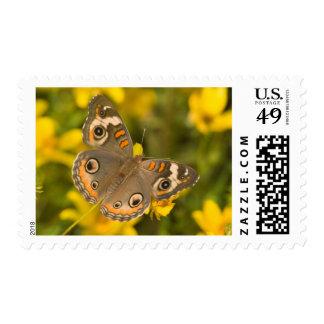 Ballard Nature Center Stamp