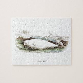 Ballena #7 de la beluga puzzle con fotos