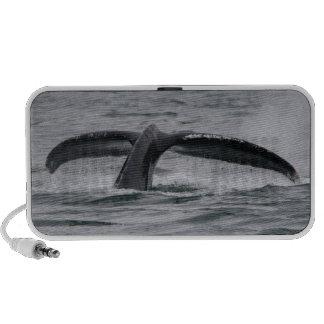 ballena altavoz de viajar