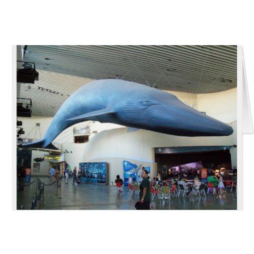 Ballena azul tarjetas