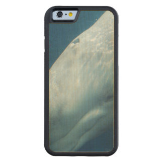 Ballena blanca funda de iPhone 6 bumper arce