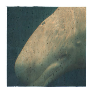 Ballena blanca posavasos
