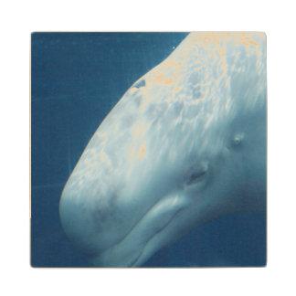 Ballena blanca posavasos de madera
