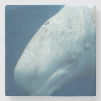 Ballena blanca posavasos de piedra