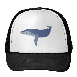 Ballena de joroba humpback whale gorro