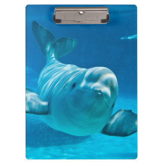 Ballena de la beluga