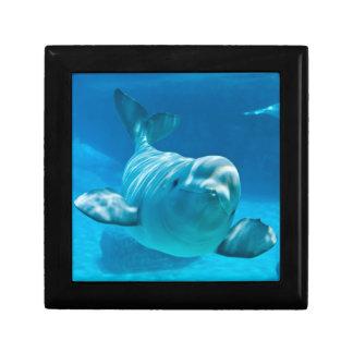 Ballena de la beluga caja de regalo