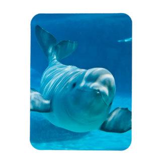 Ballena de la beluga iman flexible