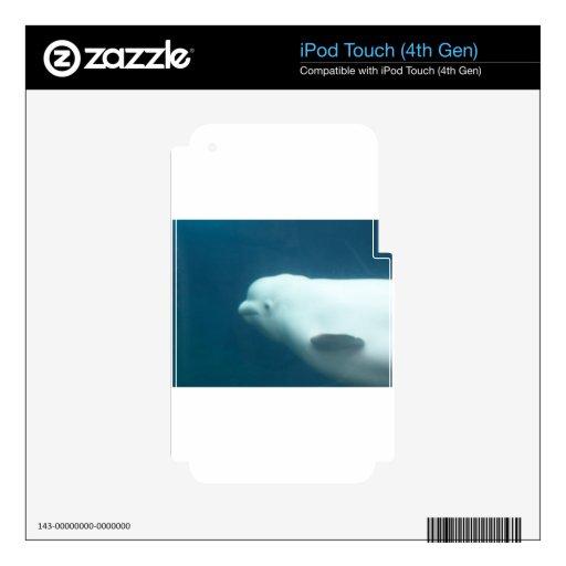 Ballena de la beluga iPod touch 4G calcomanías