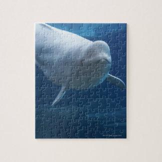 Ballena de la beluga (leucas del Delphinapterus) Rompecabeza