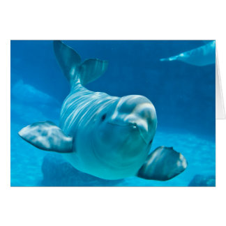 Ballena de la beluga tarjeta de felicitación