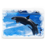 Ballena de la orca