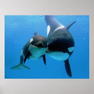 Ballena de la orca con el becerro póster