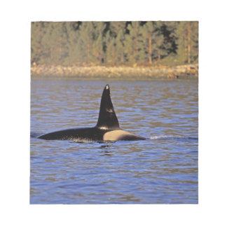 Ballena de la orca o de asesino blocs