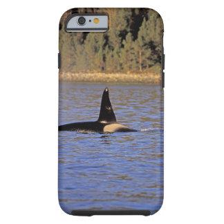 Ballena de la orca o de asesino funda de iPhone 6 tough