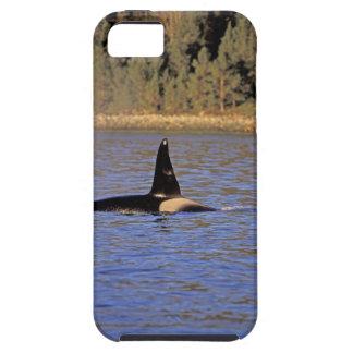 Ballena de la orca o de asesino iPhone 5 carcasa