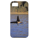 Ballena de la orca o de asesino iPhone 5 cobertura