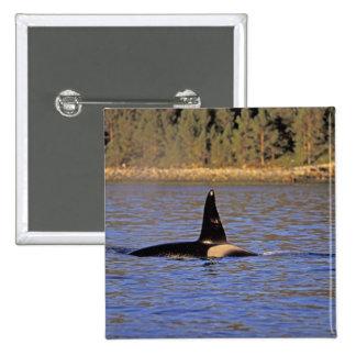 Ballena de la orca o de asesino pin