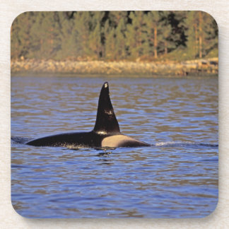 Ballena de la orca o de asesino posavasos de bebida