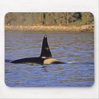 Ballena de la orca o de asesino tapete de raton