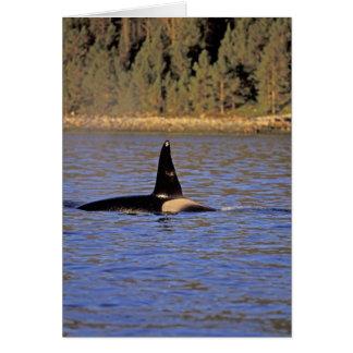 Ballena de la orca o de asesino tarjeta de felicitación