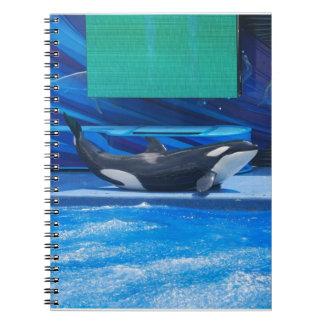 Ballena de la orca que muestra apagado cuadernos